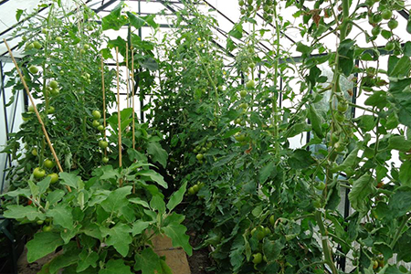 SMART Agricultural Greenhouse